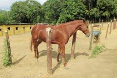 Häst i jordbruksmark Royaltyfri Bild