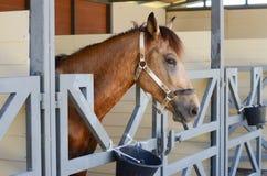 Häst i ladugård Royaltyfria Foton