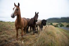 Häst i lantgård arkivfoton