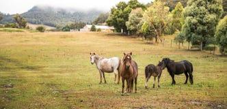 Häst i lantgård Fotografering för Bildbyråer