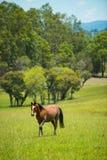 Häst i lantgårdbygd Arkivbilder
