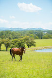 Häst i lantgårdbygd arkivfoto