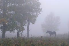 Häst i misten royaltyfri fotografi