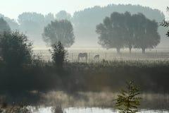 Häst i morgonmisten Arkivfoton