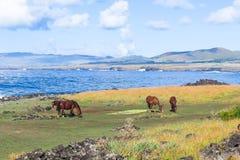Häst i påskön, Chile Arkivfoton