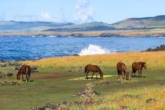 Häst i påskön, Chile Fotografering för Bildbyråer