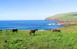 Häst i påskön, Chile Royaltyfri Bild