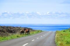 Häst i påskön, Chile Arkivfoto