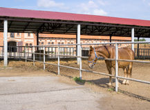 Häst i paddock Royaltyfria Bilder