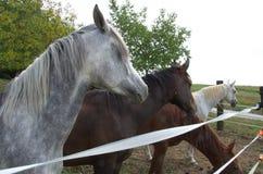 Häst i paddocken Arkivfoton
