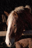 Häst i regn Arkivbilder