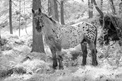 Häst i sagaträ Royaltyfria Foton