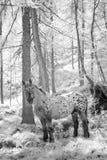 Häst i sagaträ Fotografering för Bildbyråer