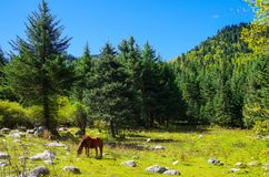 Häst i skog royaltyfria foton