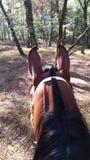Häst i skog Arkivfoto