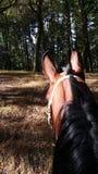 Häst i skog Royaltyfri Fotografi