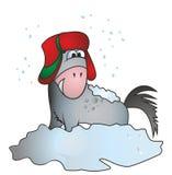 Häst i snö med hattjnhuvudet Arkivbilder