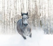 Häst i snödriva arkivbilder