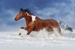 Häst i snow Arkivbild