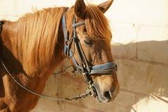 Häst i solen arkivbild