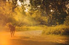 Häst i solljus Arkivfoto