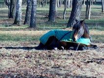 Häst i sova för filt Royaltyfri Fotografi