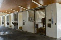 Häst i stall av det häst- sjukhuset royaltyfri foto