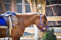 Häst i stallen royaltyfri fotografi