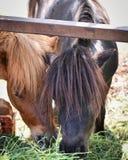 Häst i stallen royaltyfri bild