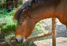 Häst i stallen fotografering för bildbyråer