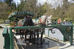 Häst i Stanley Park Canada Arkivfoton
