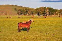 Häst i Steppe Royaltyfria Foton