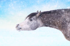 Häst i vintersnöfall royaltyfri foto