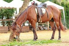 Häst i zoo Fotografering för Bildbyråer