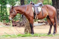 Häst i zoo Arkivbild