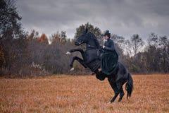 Häst-jakt med damer i ridningvana arkivbild