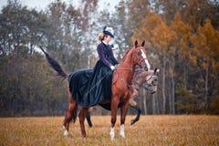 Häst-jakt med damtoalett i ridningvana royaltyfri foto