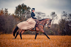 Häst-jakt med damtoalett i ridningvana royaltyfria foton