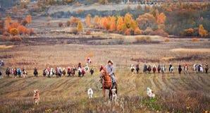 Häst-jakt med ryttare i ridningvana arkivbilder