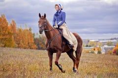 Häst-jakt med ryttare i ridningvana fotografering för bildbyråer