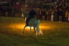 Häst Jerez Royaltyfri Foto