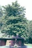Häst-kastanj trädblomning i Kassel Arkivfoton
