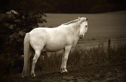 häst med Arkivbilder
