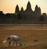 Angkorwat royaltyfria bilder
