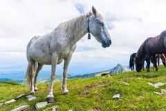 Häst med en klocka Royaltyfri Foto