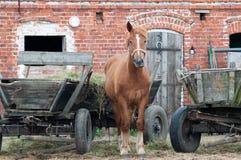 Häst med en röd ladugård. Arkivfoto