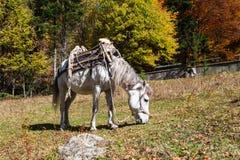 Häst med en sadel Royaltyfria Foton