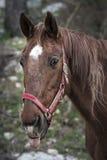 Häst med ett roligt uttryck Royaltyfria Foton