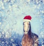 Häst med jultomtenhatten på bakgrund för vintersnöflingajul royaltyfri bild