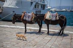 Häst med katten Arkivfoto